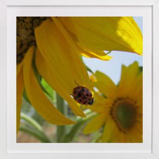 Lady Bug on a Sunflower Petal  Art Print