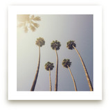 Sunny Palm Trees by Five Sparrows