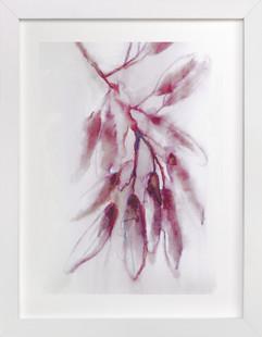 Fragrant Eucalyptus  Art Print