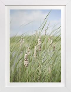 Summer grass one  Art Print