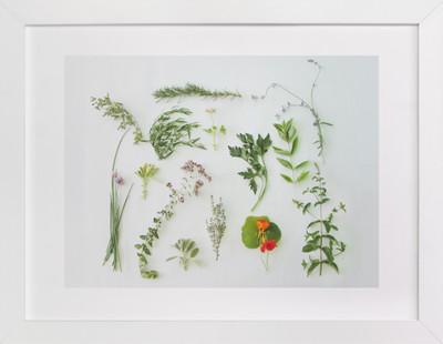 Modern Herb Garden  Art Print