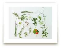 Modern Herb Garden by Kate Wong