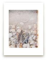 Beachcomber II by Ann Gardner