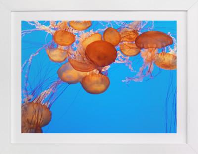 Cool Jellies 7  Art Print