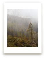 Alpine Autumn by Courtney Crane