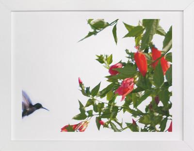 A hummingbird in action  Art Print