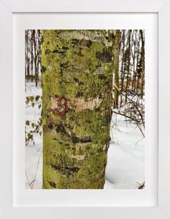 Winter Green  Art Print