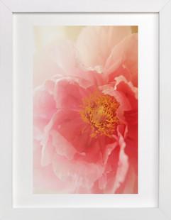 Garden Peony  Art Print