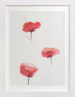 Poppies Study  Art Print