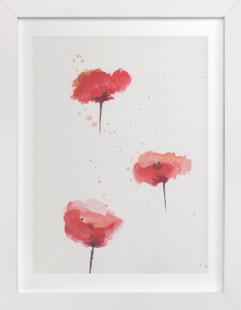 Poppies Study  Art Print
