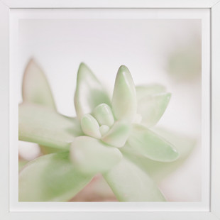 Soft Succulent No. 3  Art Print