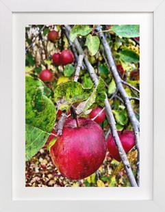 Fruition  Art Print