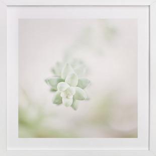 Soft Succulent No. 1  Art Print