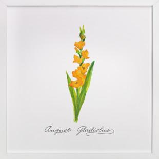 August Gladiolus  Art Print