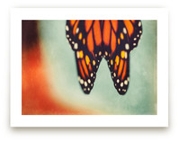 Monarch Study #6 by Stacy Kron