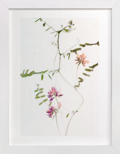 Mauve Tiny Flowers  Art Print