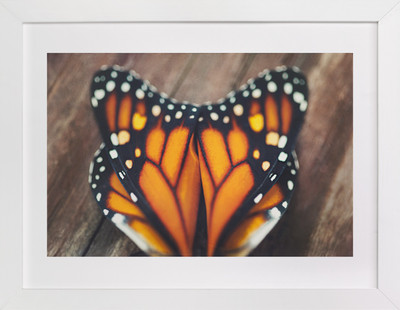 Monarch Study #3  Art Print