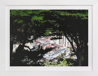 San Francisco Tree View  Art Print