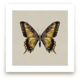 Swallowtail by Ann Gardner