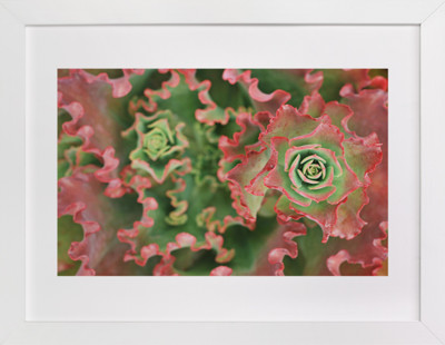 Bold Succulent  Art Print