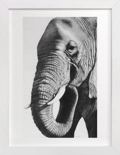 Face of an Elephant  Art Print