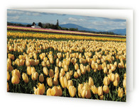 Yellow Tulips card Greeting Cards