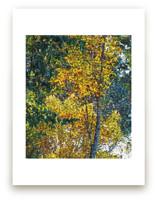 November Foliage by Mariecor Agravante