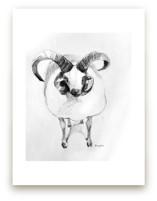 Jacob sheep by Tracy Ann