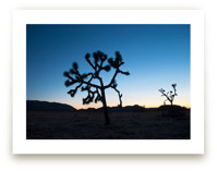 Joshua Trees at Twiligh... by Kathy Van Torne