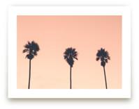 Palm Crush