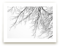 Winter White Branches by Alexis Arnold
