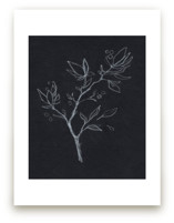 Black & White Botanical no.2