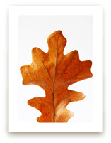 Oak Leaf by Alexis Arnold