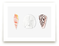 Shell Collection by Artsy Canvas Girl Designs