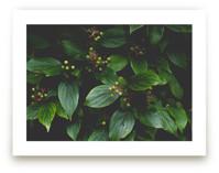 Green Berry Ben by Katie Short