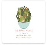 Succulent teacup Moving Announcements