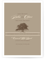 Oak Tree