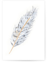 Grey Feather