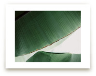 leaf & light 1