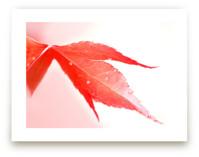 Raindrops on red leaf by Celia Maria