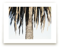 Hanging Palms