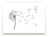 dandelion in charcoal..... by aeryn donnelly design