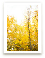 Autumn In New York Wall Art Prints