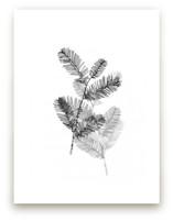 Redwood by Ashleigh Ninos