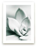 Mint Succulent