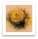 Yellow Waterlily Dahlia by A MAZ Design