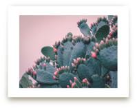 Rouge Bloom