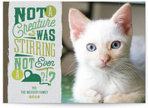 Kitty's Delight Holiday Photo Cards